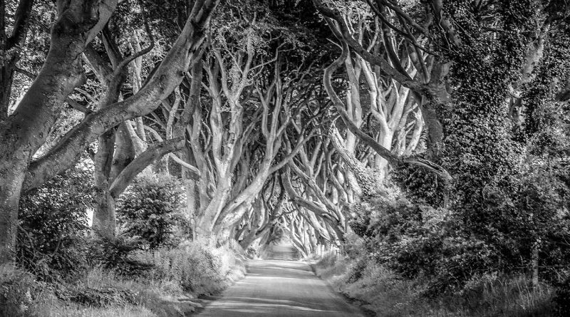 dark hedges on 2hearts